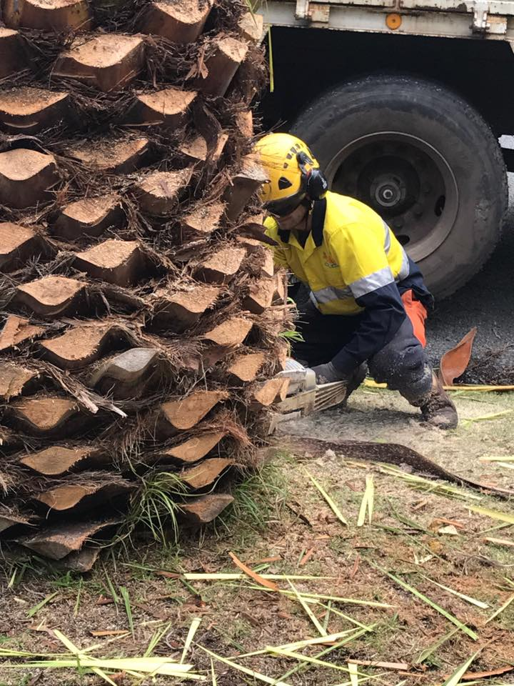 Gab group arborist palm tree removal and cleaning services you should never try to do it yourself as that could mean jeopardizing your life and those near you as well as damaging nearby houses and vehicles solutioingenieria Image collections